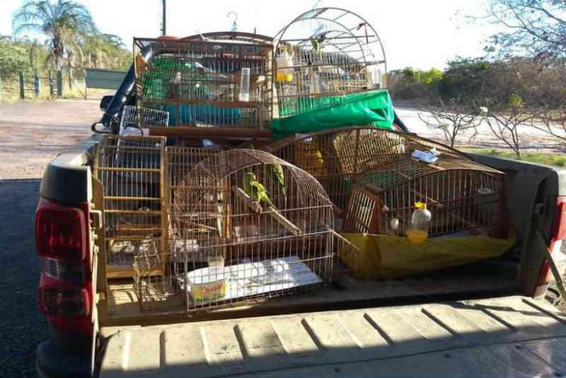 Polícia Militar resgata 23 aves mantidas em cativeiro em Planaltina, DF