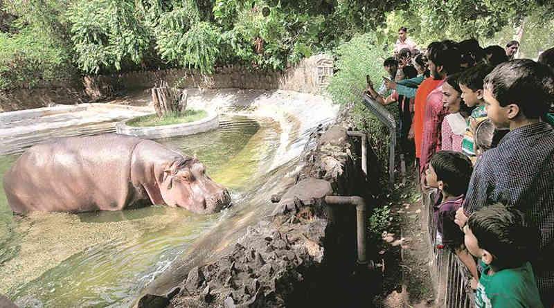 Índia: Tribunal requer ao Zoológico de Delhi que preserve documentos sobre mortes de animais