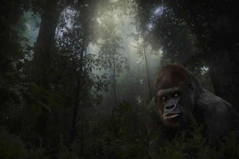 Dois dos maiores parques de biodiversidade de vida selvagem do mundo estão agora abertos para exploração de petróleo. Por que você deveria se importar?