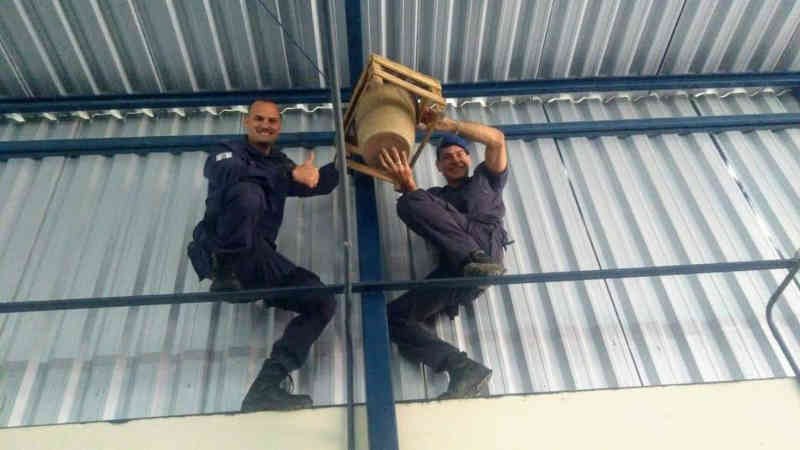 Guardas municipais resgatam ouriço-cacheiro em 'camelódromo' da Serra, ES