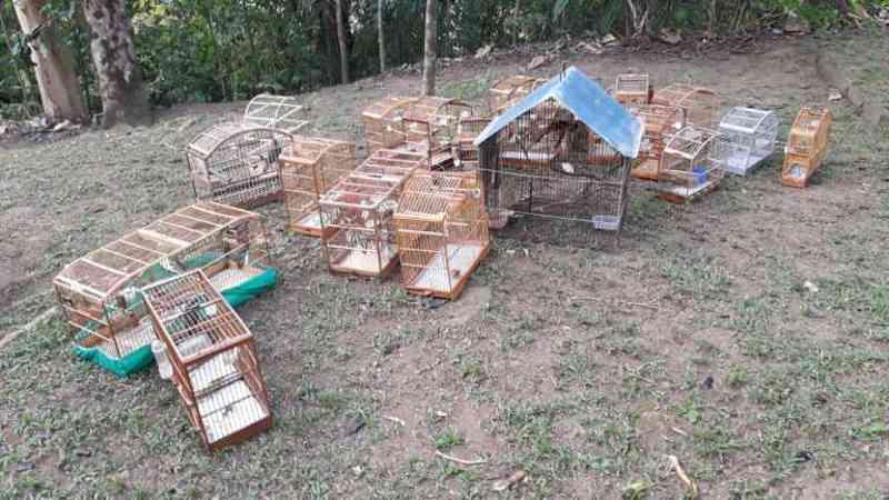 PM apreende 37 pássaros silvestres em cativeiros de Alegre, ES