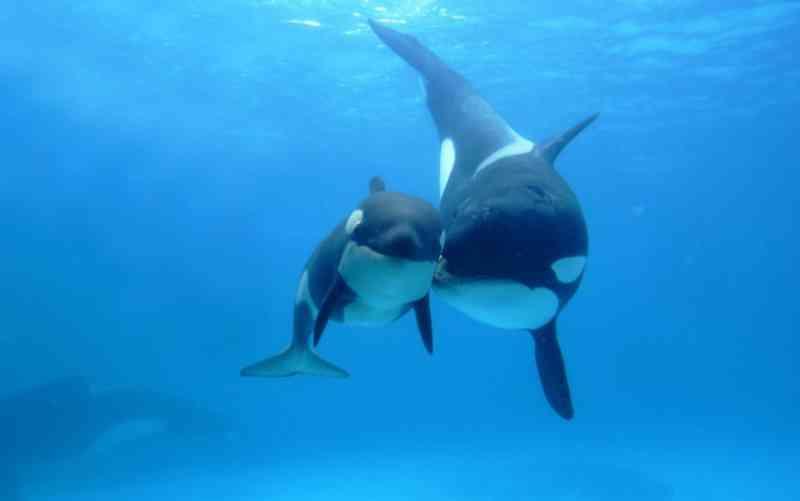 Blackfish: SeaWorld vai pagar US$ 5 milhões por fraude após denúncia de documentário