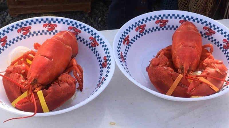 Restaurante usa maconha como sedativo para que lagostas não sintam dor ao ser preparadas