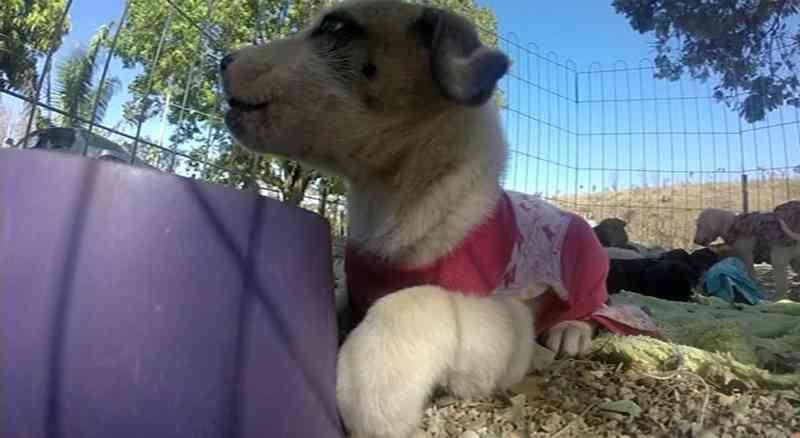 Abrigo para cães abandonados precisa de doações de ração e galões de água, em Cidade Ocidental, GO