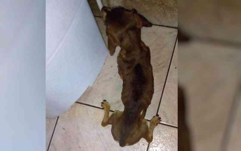 Cachorro foi resgatado desnutrido e em andar, em Goiânia (Foto: Arquivo Pessoal)