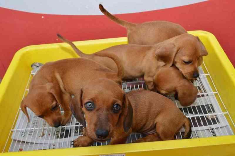 Vereador quer proibir a venda de filhotes de cachorros e gatos em Goiânia, GO