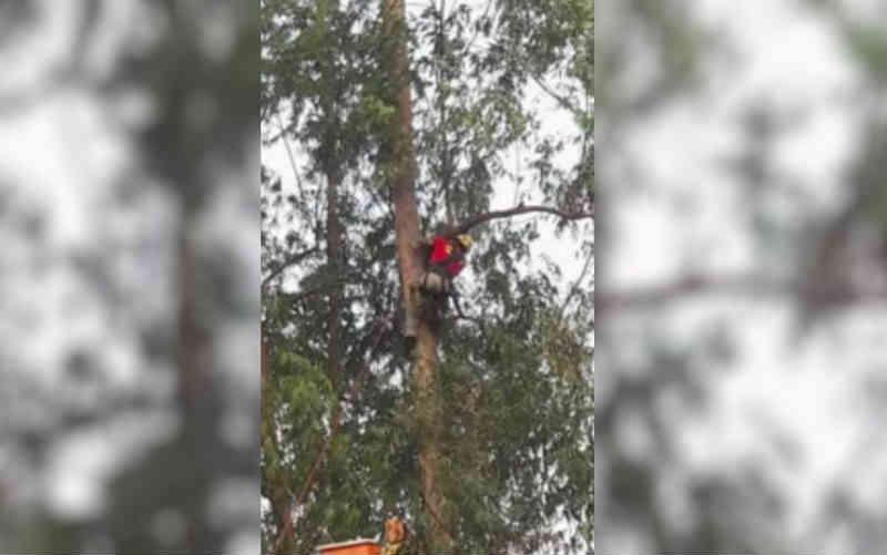 Gato é resgatado após ficar 9 dias em árvore a 32 metros de altura, em Piracanjuba, GO
