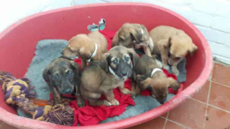 Cães são abandonados em frente à hospital veterinário em Londres