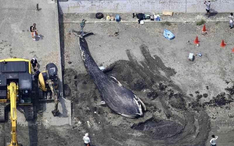 Plástico é encontrado em estômago de baleia que apareceu morta em Kanagawa, Japão