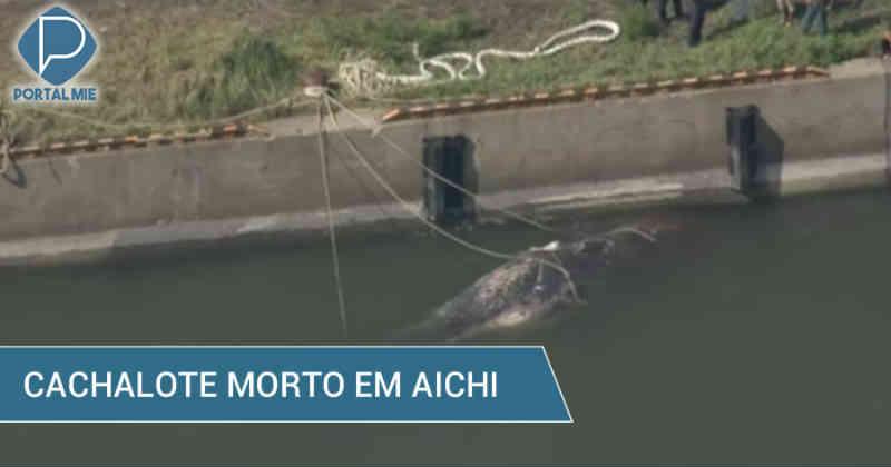 Cachalote é encontrado morto em Toyohashi, no Japão