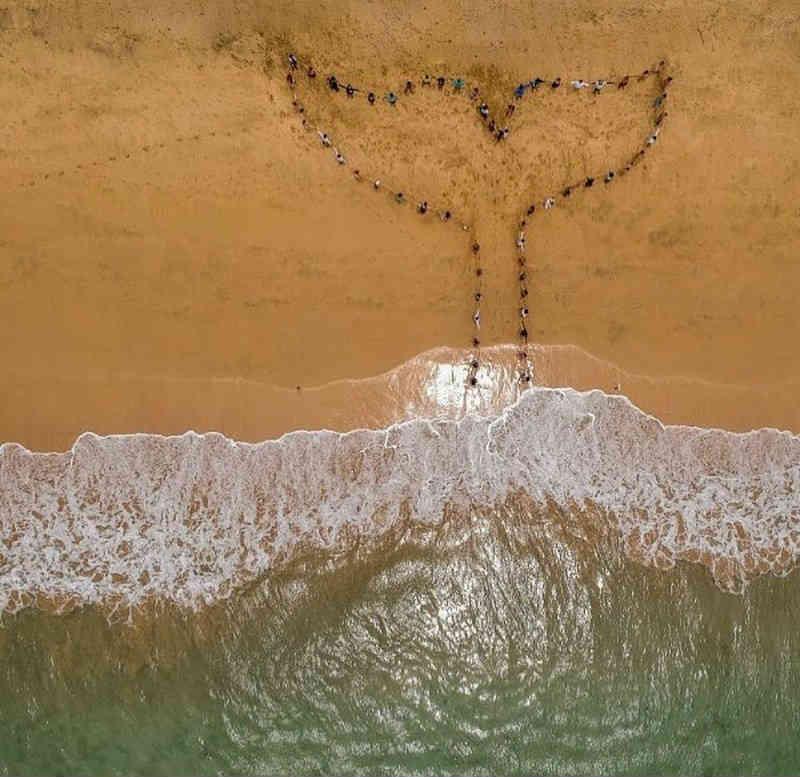Ato em prol das baleias é realizado em Fernando de Noronha