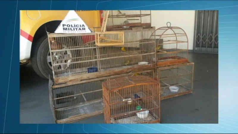 Homem é preso por manter pássaros da fauna silvestre em cativeiro em Araxá, MG