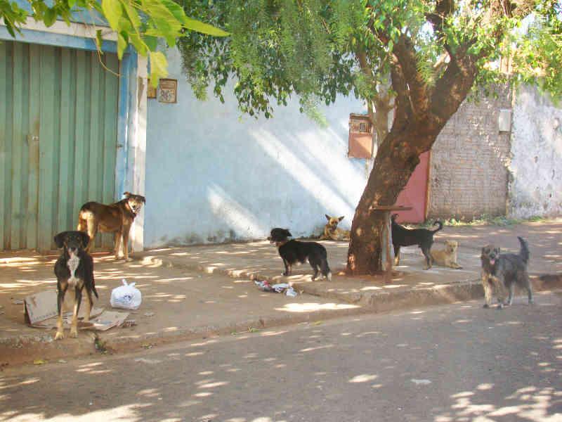 Prefeitura Municipal de Uberaba (MG) e Ministério Público discutem Controle Populacional de Cães e Gatos
