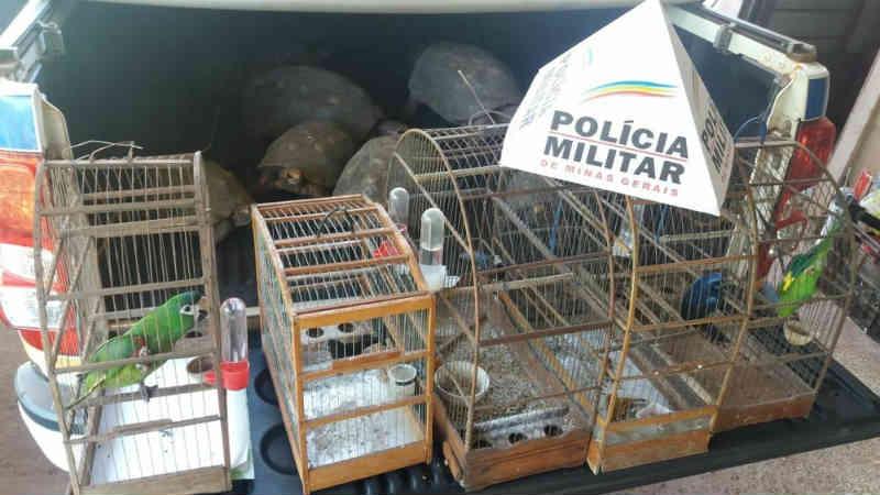 Polícia de Meio Ambiente apreende animais silvestres em Uberlândia, MG