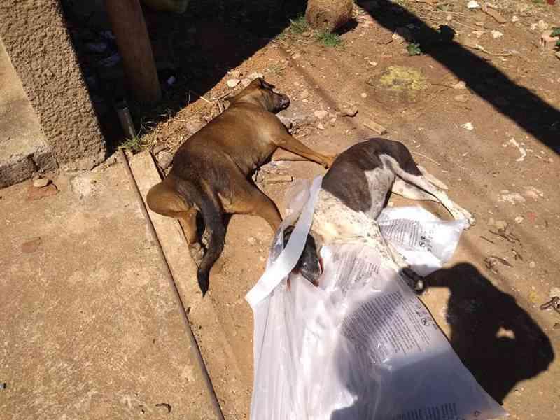 Cadelas morrem envenenadas no bairro Bela Vista, em Carmo do Paranaíba, MG