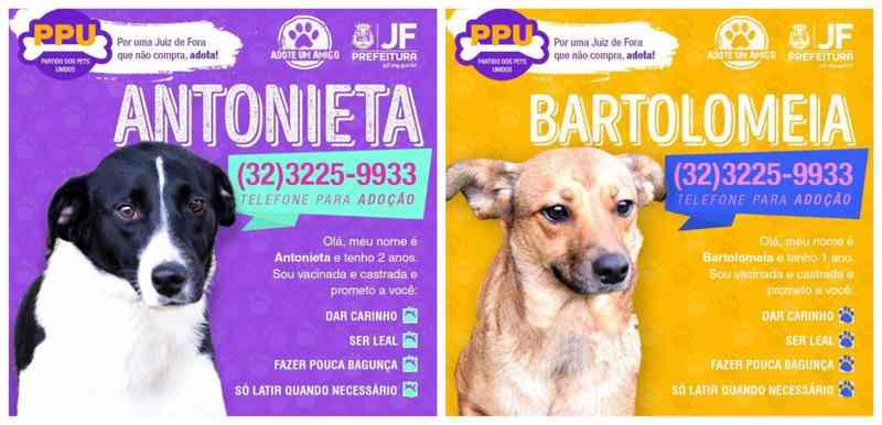 Santinhos com cães candidatos viram campanha para incentivar adoção em Juiz de Fora, MG
