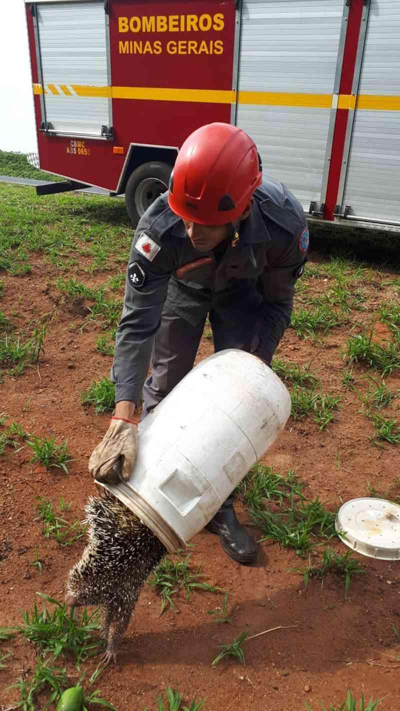 Bombeiros resgatam porco-espinho em árvore no distrito de Piracaíba, MG