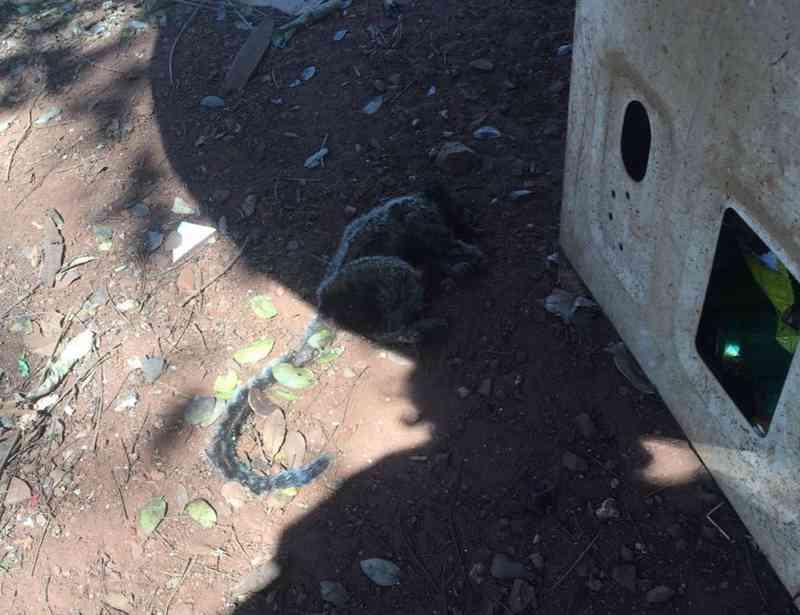 Mico é encontrado morto em chácara na zona rural de Uberaba, MG