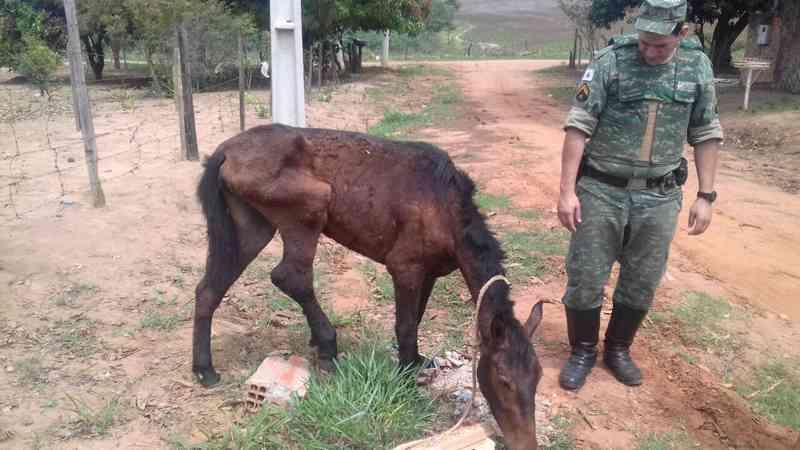 Égua em situação de maus-tratos foi resgatada em Uberlândia — Foto: Polícia Militar de Meio Ambiente/Divulgação