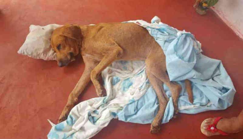 Prefeitura aplica multas de R$ 900 a moradores que maltrataram animais em Campo Grande, MS