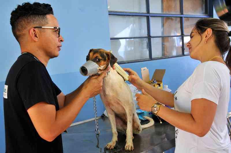 Projeto para atendimento veterinário gratuito na Capital caminha para sair do papel - Foto: Valdenir Rezende/Correio do Estado