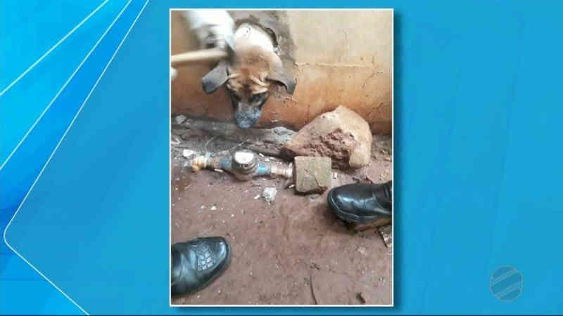 Bombeiros de MS resgatam cão que ficou com a cabeça presa em muro