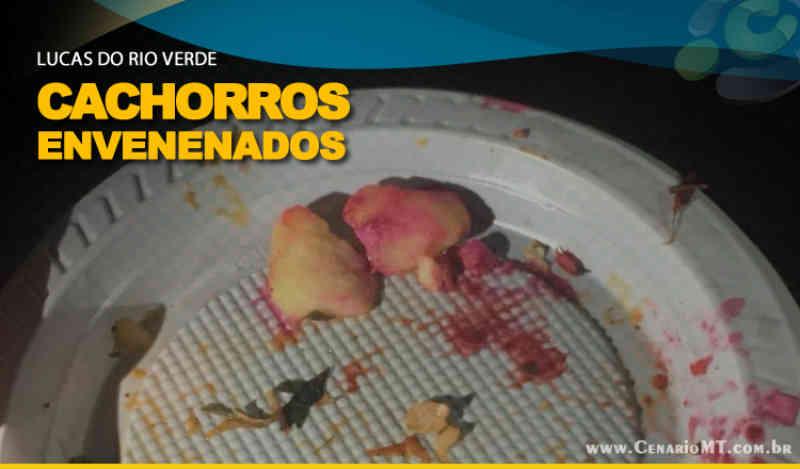 Cachorros são envenenados com 'chumbinho' em bairro de Lucas do Rio Verde, MT