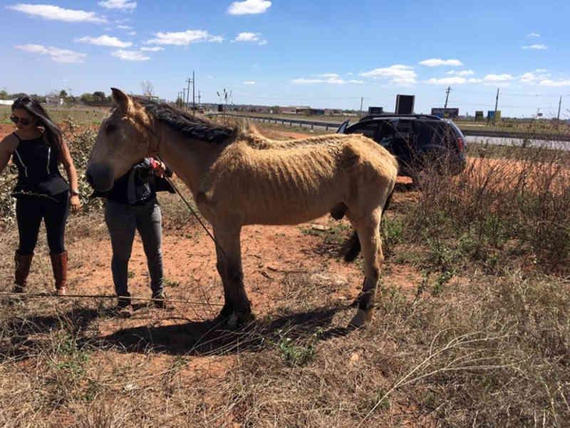 Cavalo vítima de maus-tratos é encontrado amarrado é resgatado por policiais em MS