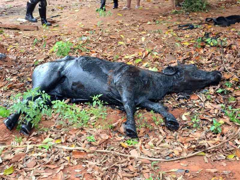 Animal precisou ser sacrificado. Foto: Luiz Guido Jr.