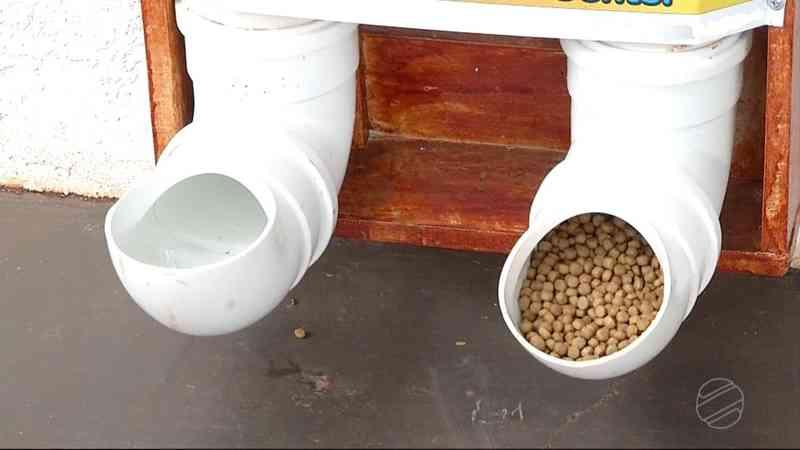Empresária instala dispositivo com comida e água de graça para animais de rua: 'Ideia simples e de baixo custo' em Campo Grande, MS