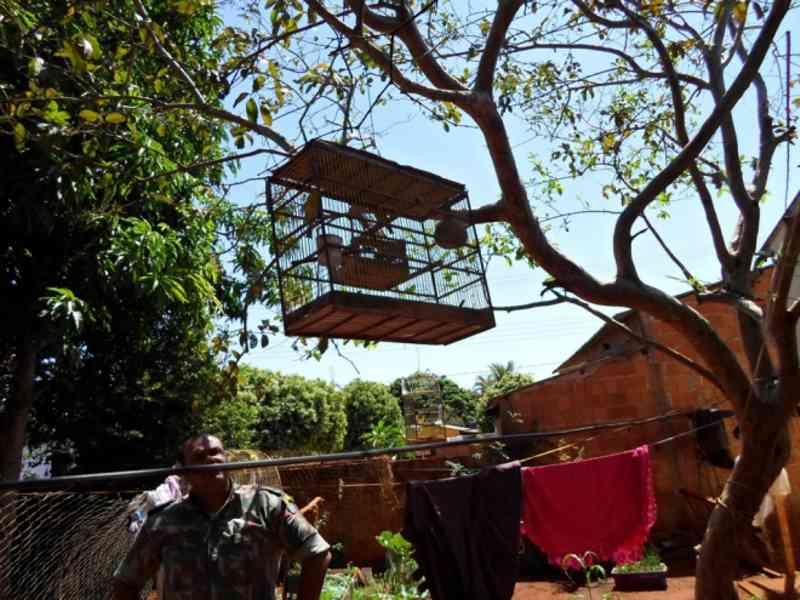Homem é multado por criar pássaros ilegalmente em Costa Rica, MS