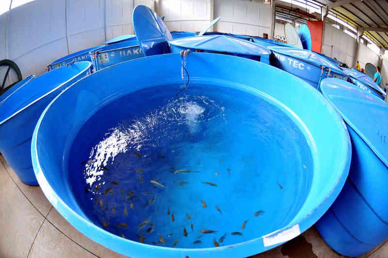 Morte de peixes em Aquário do Pantanal continua sem culpados