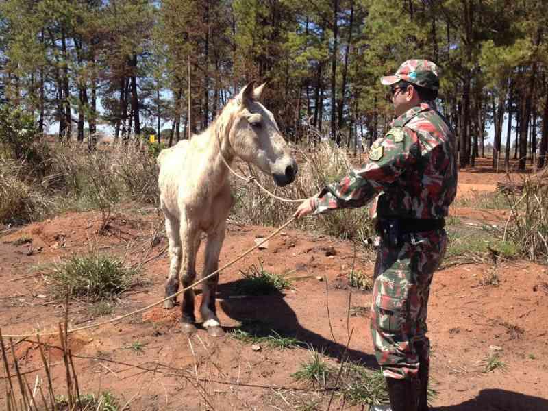 Cavalo que sofria maus-tratos é resgatado em Três Lagoas, MS
