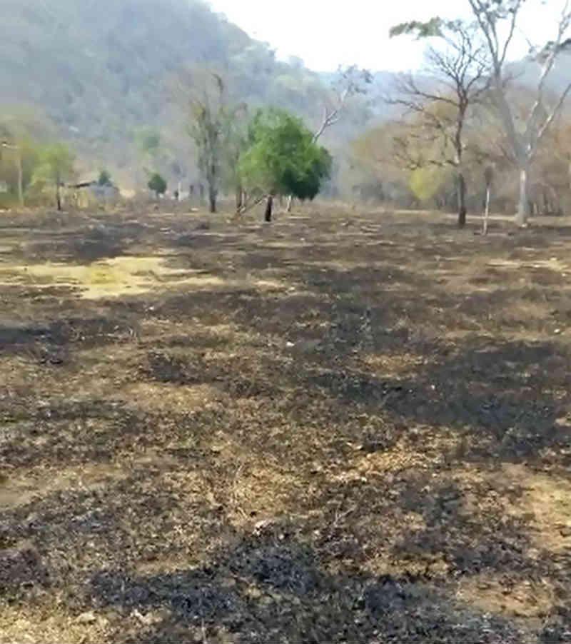 Incêndio atinge área de mata em distrito de MT, mata animais e destrói pelo menos 5 hectares