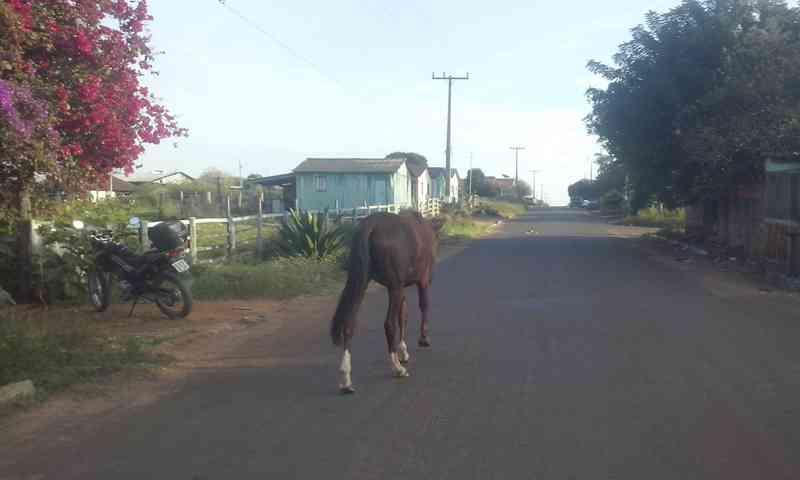 Tutores de animais soltos nas ruas são intimados e responderão por crime em Alto Araguaia, MT