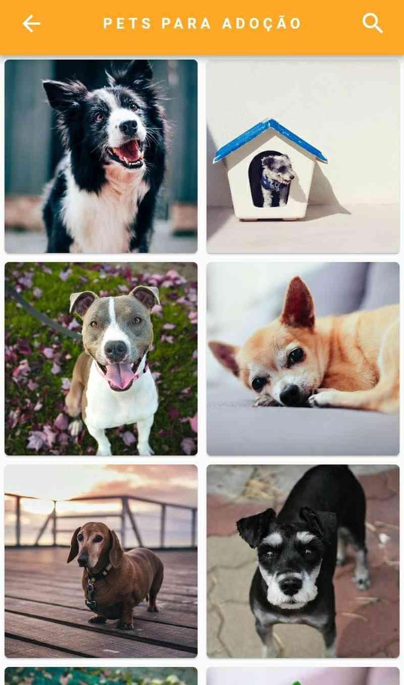 Aplicativo para adoção de cães e gatos (Foto: Reprodução)