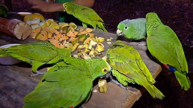 Papagaios foram soltos.