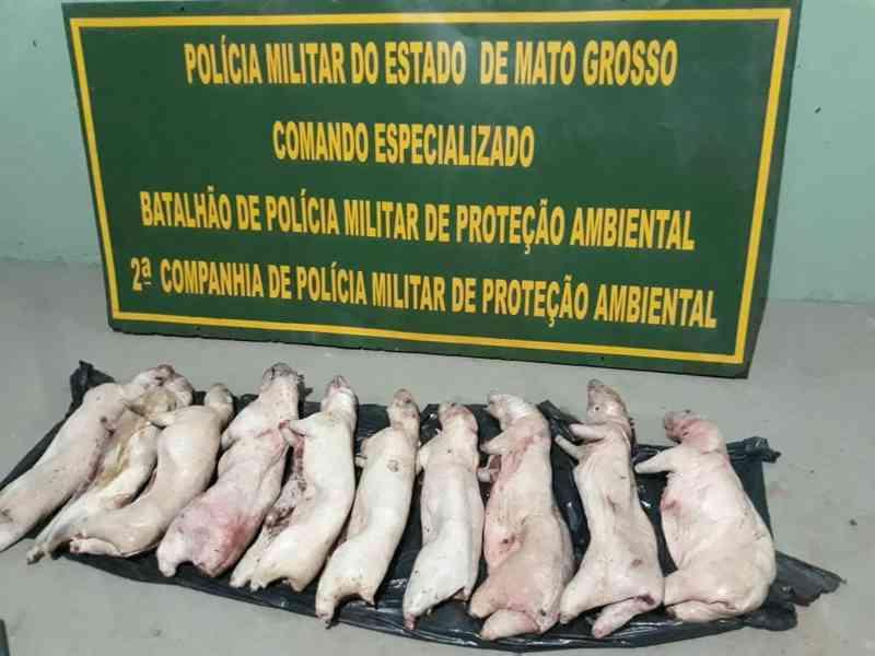 Homem estava em uma canoa e carregava uma grande caixa térmica cheia de pacas abatidas — Foto: Batalhão Ambiental da Polícia Militar de Mato Grosso