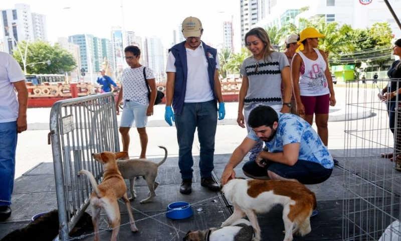 Primeiro final de semana de setembro teve feira de adoção de animais no 'Rua de Todos' em Belém, PA