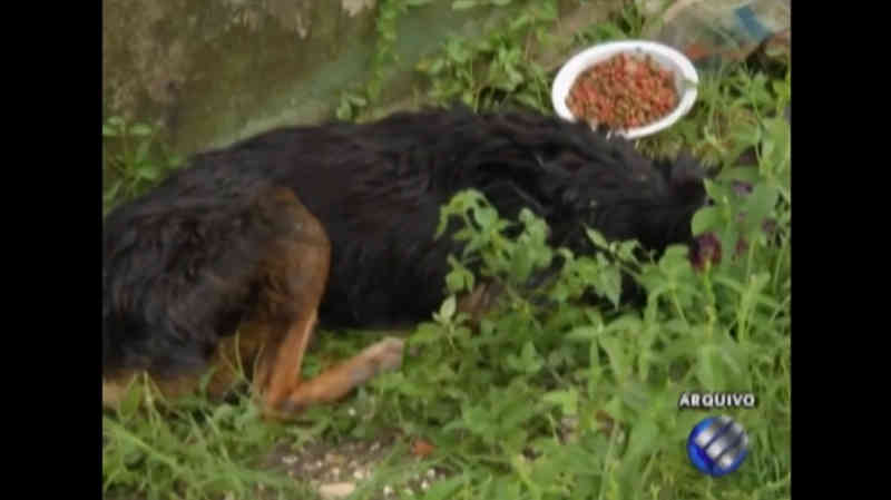 Cerca de 30 mil animais vivem em situação de abandono em Belém, PA