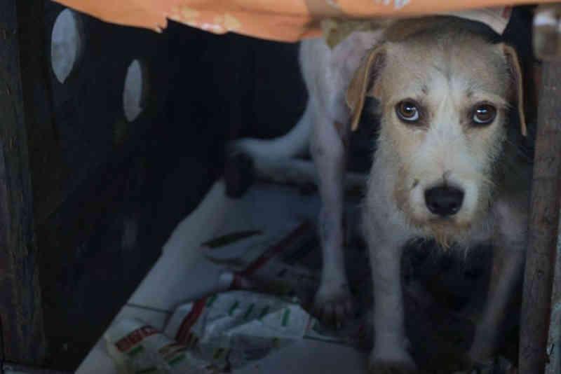 MPF quer que UFPA retire cães e gatos abandonados do campus em Belém, PA
