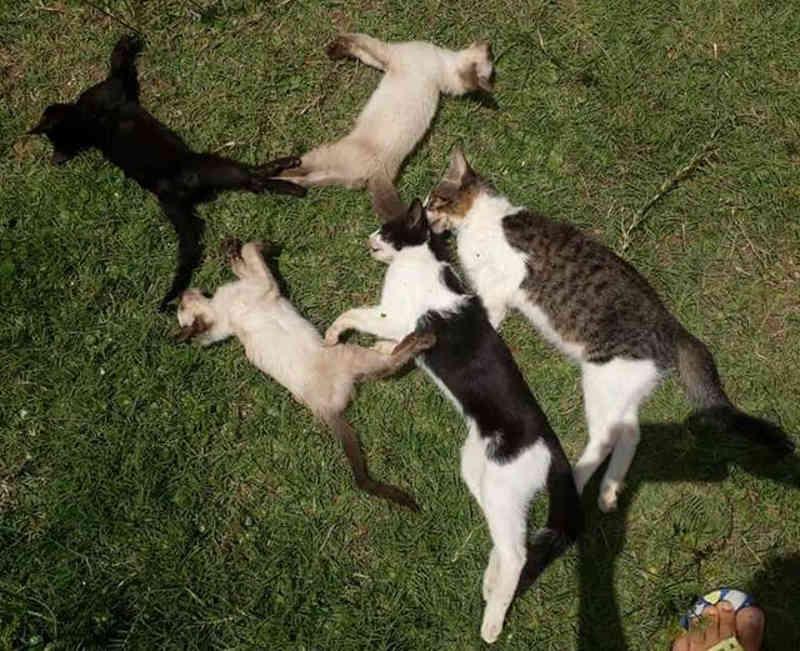 Polícia investiga envenenamento de dez gatos em Salinópolis, no Pará; oito morreram