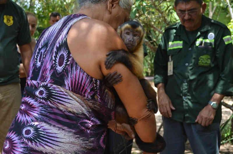 Quati, macaco e curió criados em cativeiro são resgatados em operação ambiental em Santarém, PA