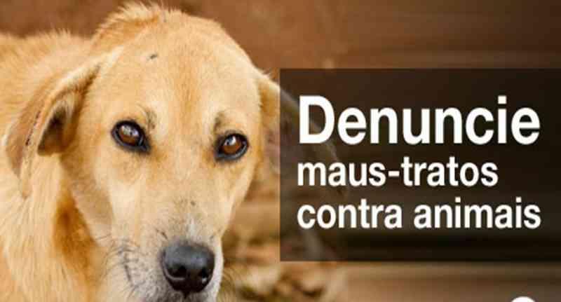 Prefeito sanciona Lei que determina multas para quem maltrata ou abandona animais em Cajazeiras, PB