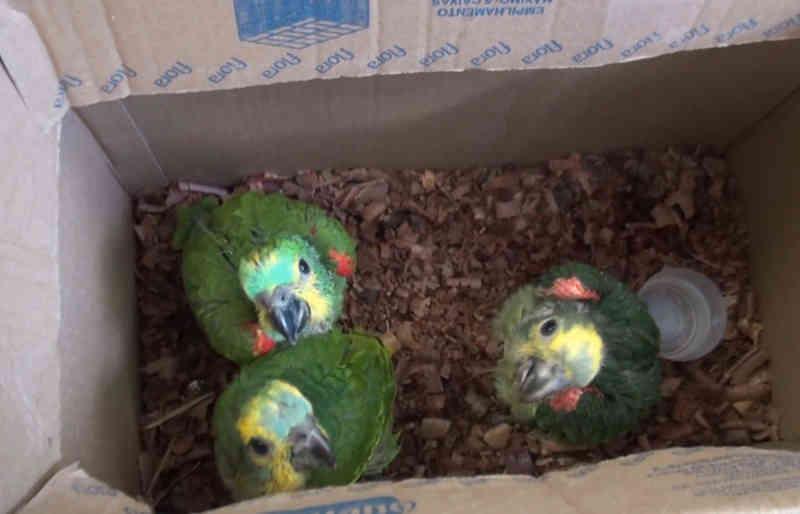 Agricultor é detido em PE por vender papagaios na internet