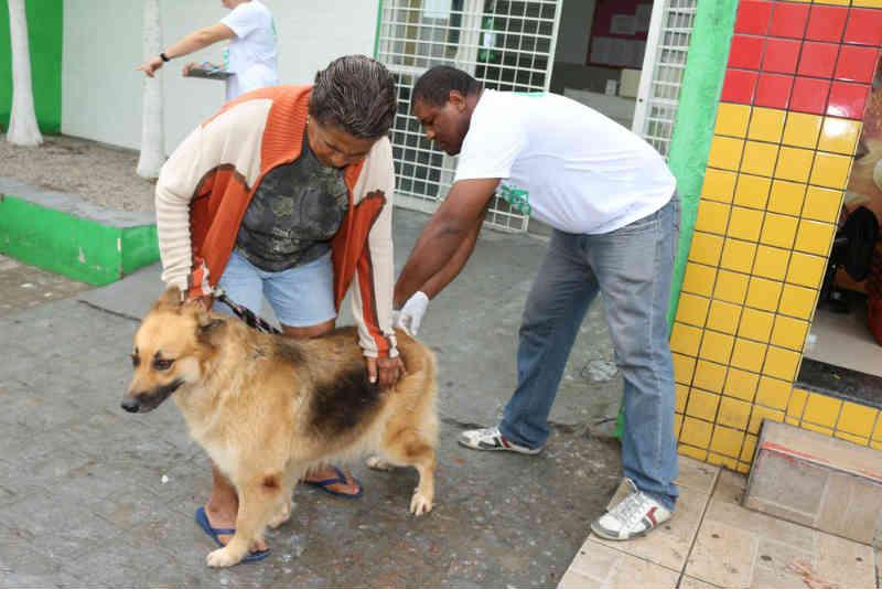 Mais de 1,5 milhão de cães e gatos devem ser vacinados contra a raiva em Pernambuco