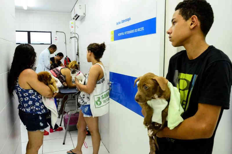 Hospital Veterinário do Recife (PE) agenda castração de cães e gatos