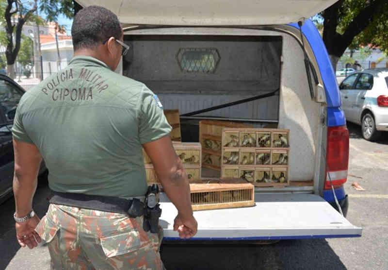 PF autua homem por venda ilegal de aves silvestres no Recife, PE