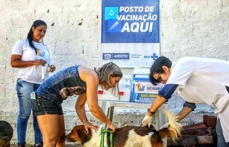 Jaboatão (PE) inicia campanha de vacinação antirrábica para cães e gatos