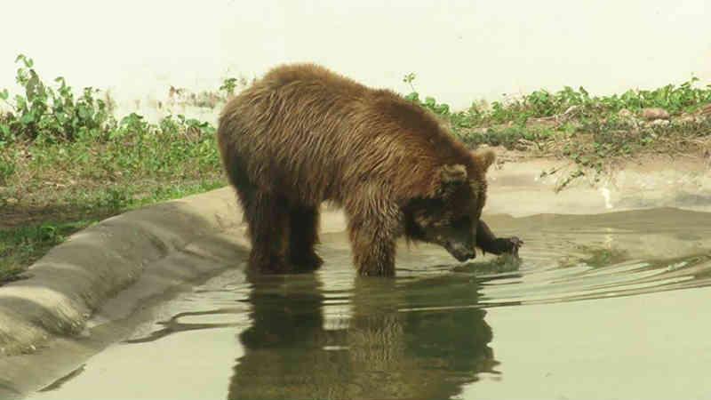 Transferência de ursa Masha será nos próximos dias.